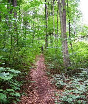 Hike through the forest at Monastery Andechs