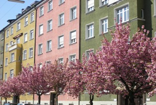 A Munich street with blossoming trees in spring